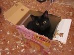 gatti_curiosi