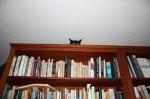 gatto-sulla-libreria